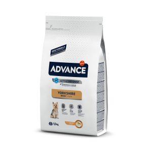 Advance Yorkshire Terrier