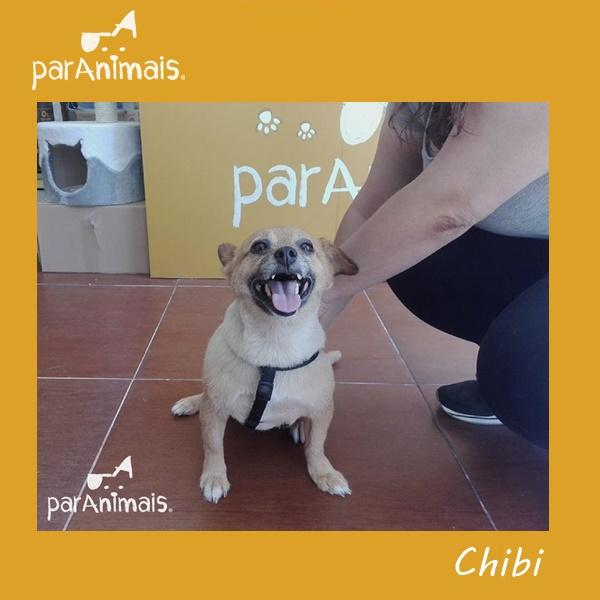 ParAnimais_Chibi_Banhos e Tosquias no Porto